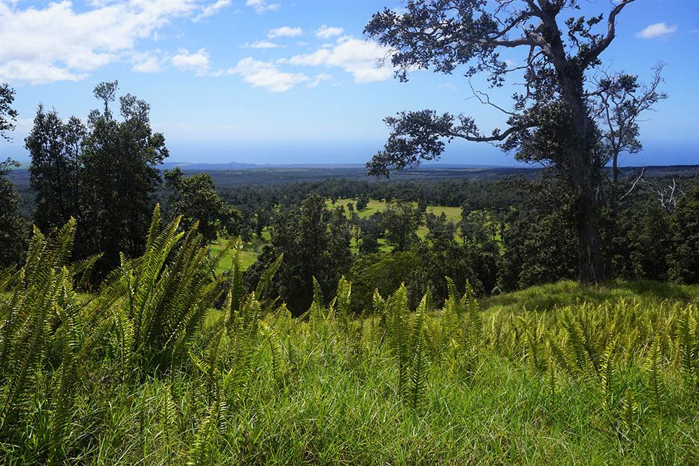 a-view-along-a-trail-hawaii-volcanoes-national-park.jpg