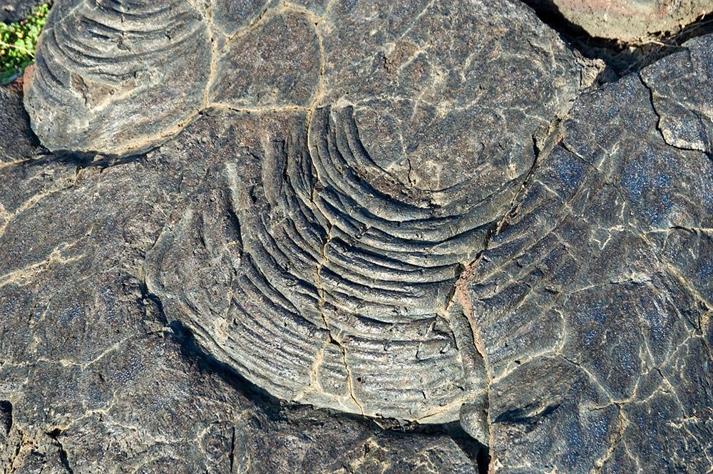 closeup-view-of--lava-pattern-big-island-hawaii.jpg