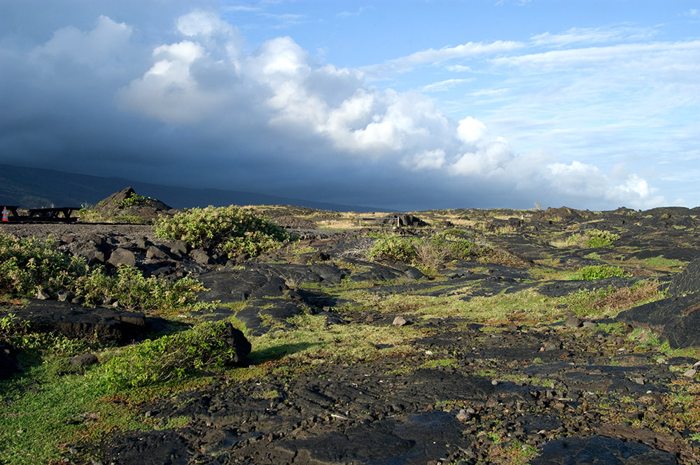 cloudy-sky-with-view-of-plants-growing-in-lava-field.jpg