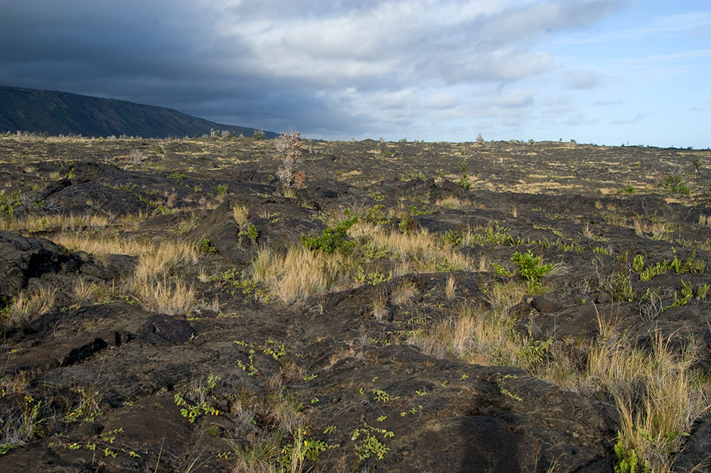 lava-fields-with-plants-growing-big-island-hawaii.jpg
