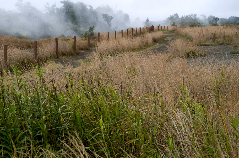 steam-in-meadow-above-crater.jpg