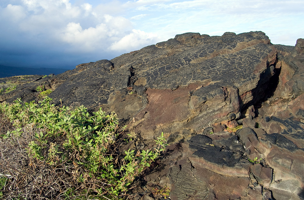 volcanic-rock-uplifted-with-plants-growing-in-rocks.jpg