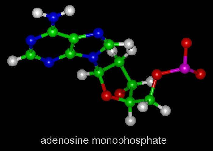 adenine1_jpg_lores.jpg