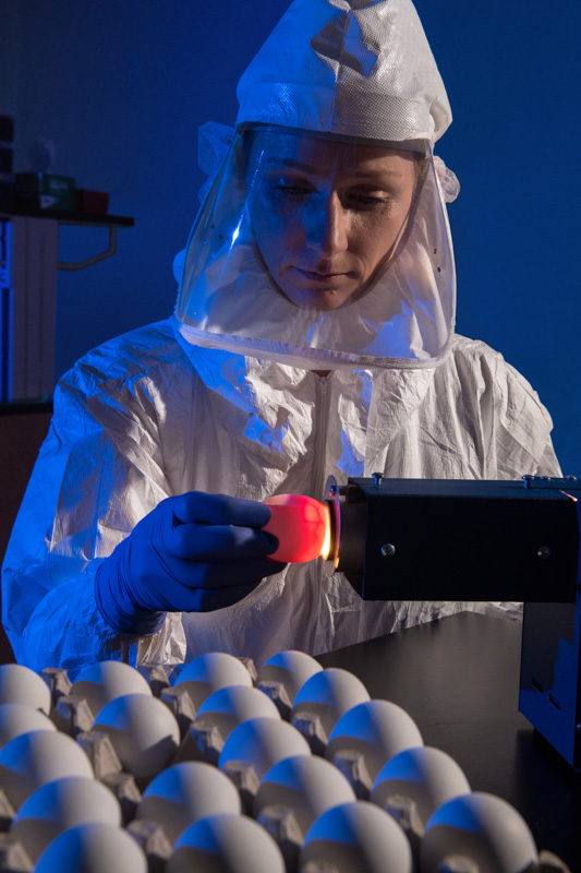 scientist-demonstrates-a-lab-technique-called-candling-on-eggs.jpg