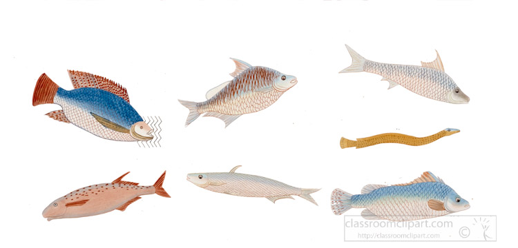 types-of-fish-used-for-food-ancient-egypt.jpg
