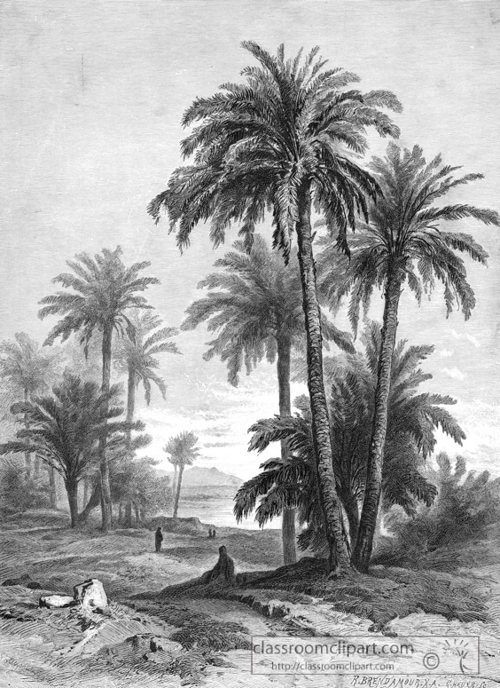 palm-trees-commonly-grown-in-egypt_036a.jpg