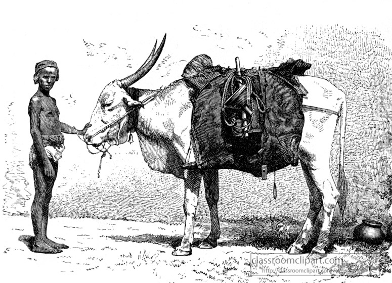 water-bearing-ox--historical-illustration.jpg