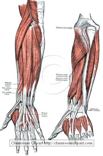 anatomy_illustLC_0453S.jpg