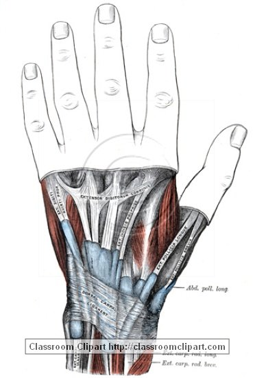 anatomy_illustLC_0459S.jpg