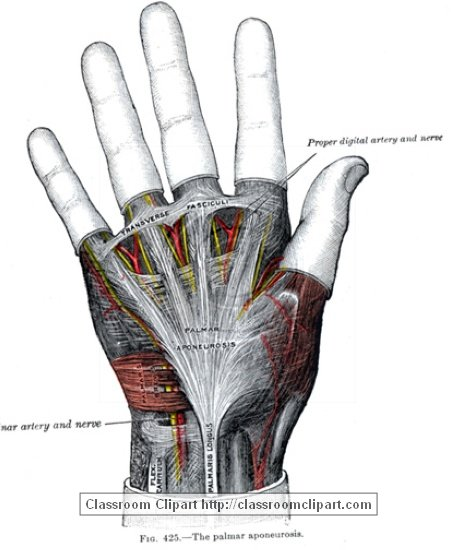 anatomy_illustLC_0460S.jpg