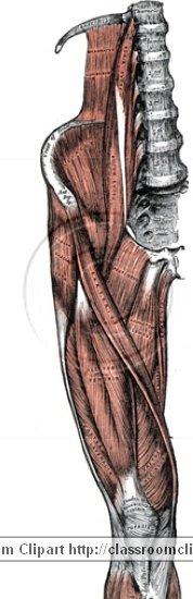 anatomy_illustLC_0466S.jpg