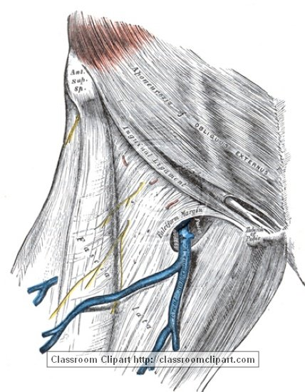 anatomy_illustLC_0469S.jpg