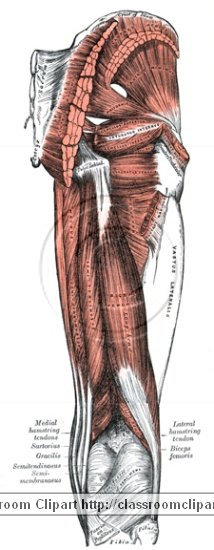 anatomy_illustLC_0475S.jpg