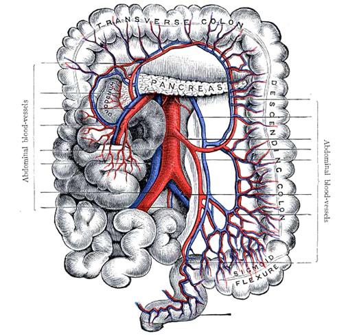 anatomy_illust_145intestine.jpg