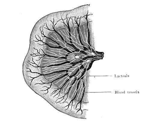 anatomy_illust_167intestine.jpg