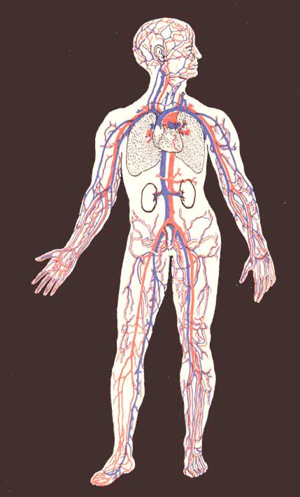 anatomy_illust_187.jpg