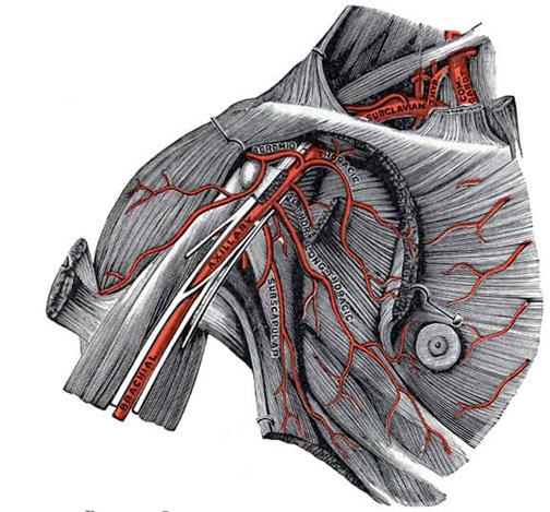 anatomy_illust_191A.jpg