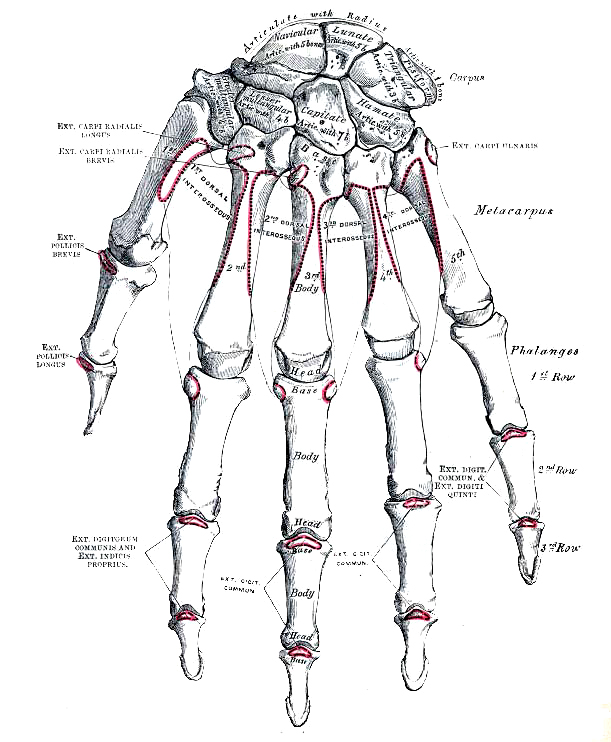anatomy_illust_223A.jpg
