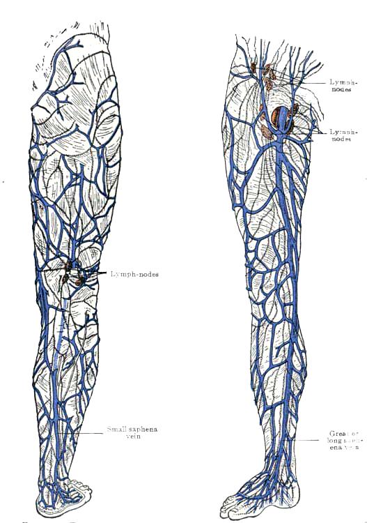 anatomy_illust_224.jpg