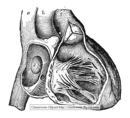 anatomy_illust_641BheartA.jpg