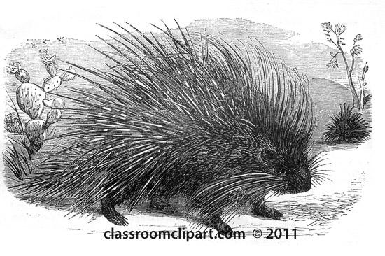 porcupine_near_cactus_1.jpg