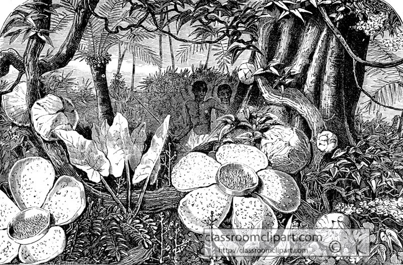parasitic_plant_historical_illustration_W4_268A.jpg