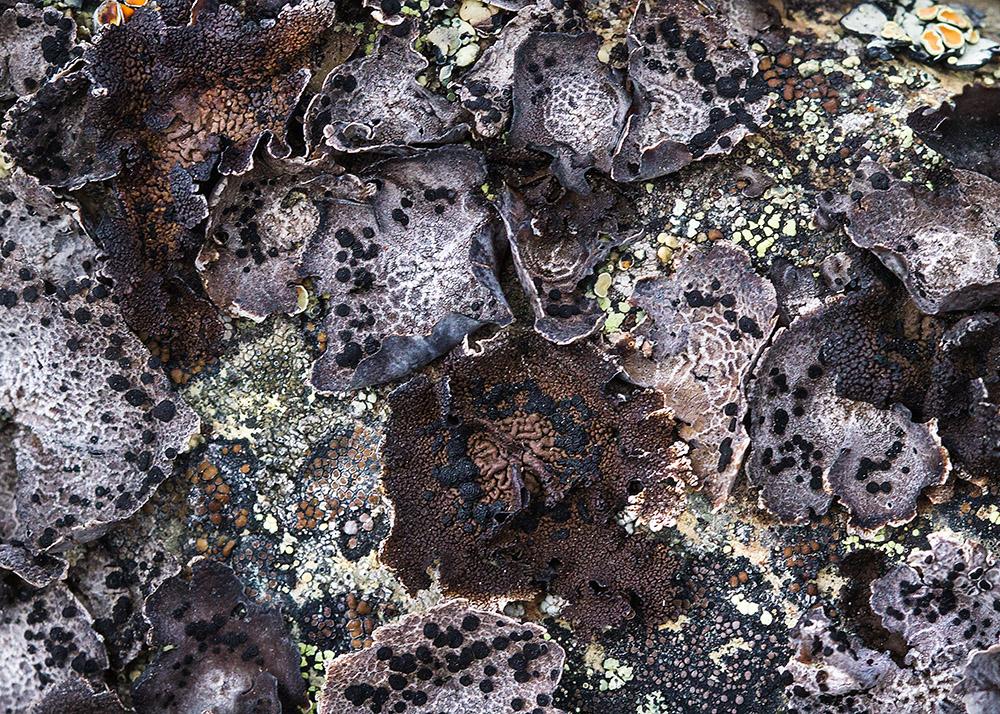 natures-pattterns-of-purples-closeup.jpg