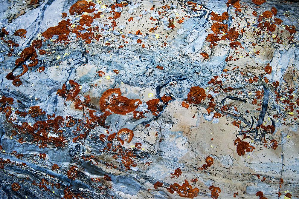 red-lichens-on-rock.jpg