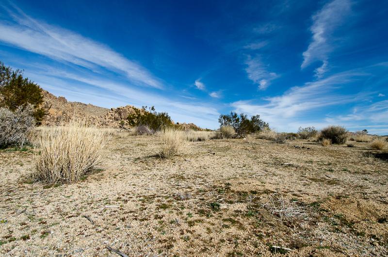 brushplants-california-desert-3216.jpg