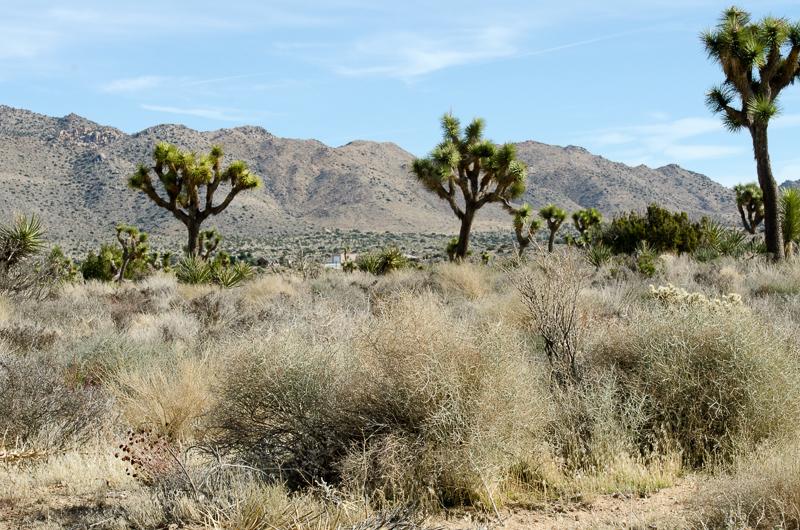desert-joshua-tree-national-park-3074.jpg
