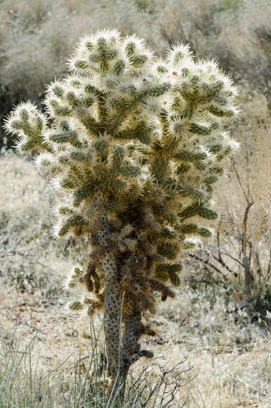 desert-joshua-tree-national-park-3086.jpg