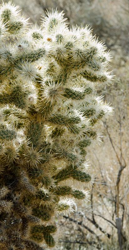 desert-joshua-tree-national-park-3086b.jpg
