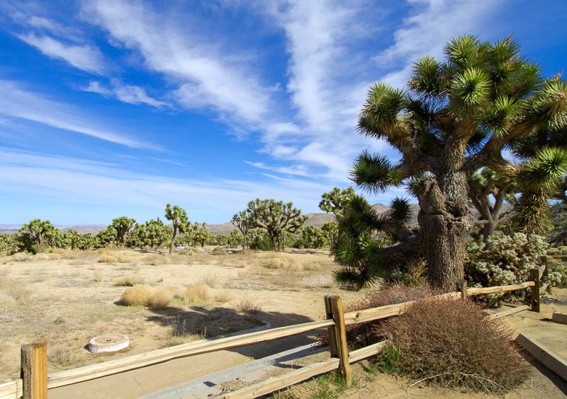 desert-joshua-tree-national-park-3095.jpg