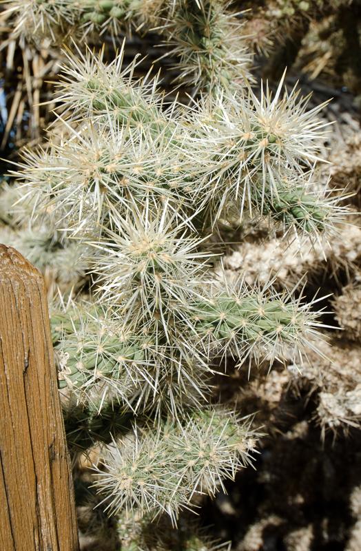 desert-joshua-tree-national-park-3100.jpg
