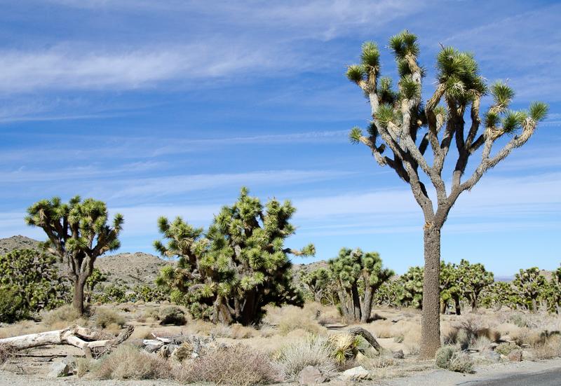 desert-joshua-tree-national-park-3104.jpg