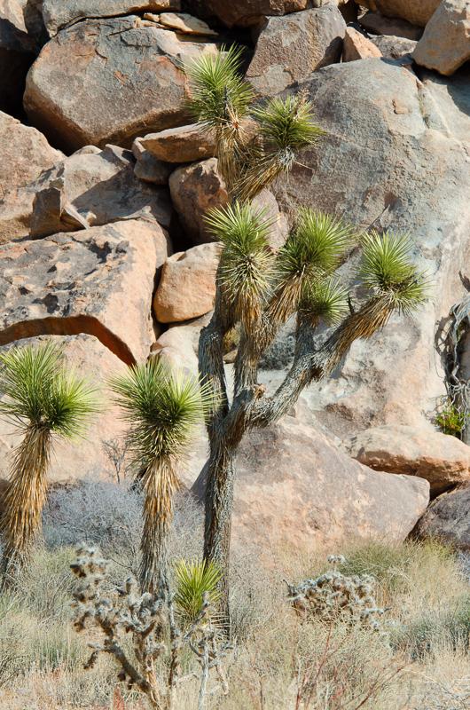 desert-joshua-tree-national-park-3180.jpg