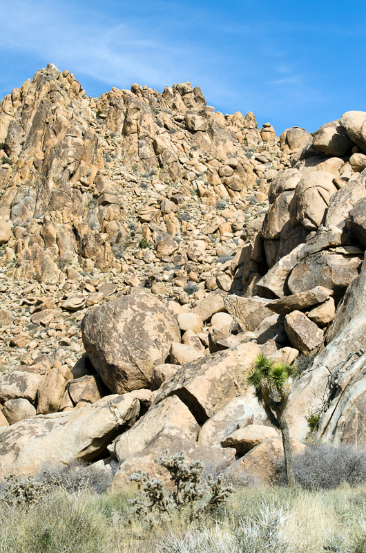 desert-joshua-tree-national-park-3184.jpg