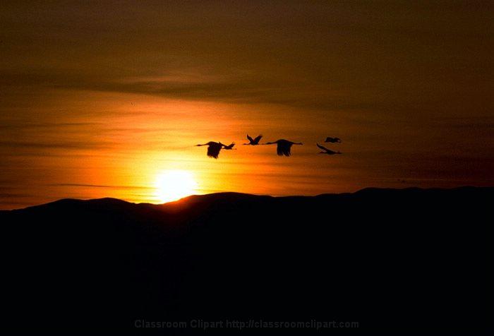Sandhill_Cranes Sunset.jpg
