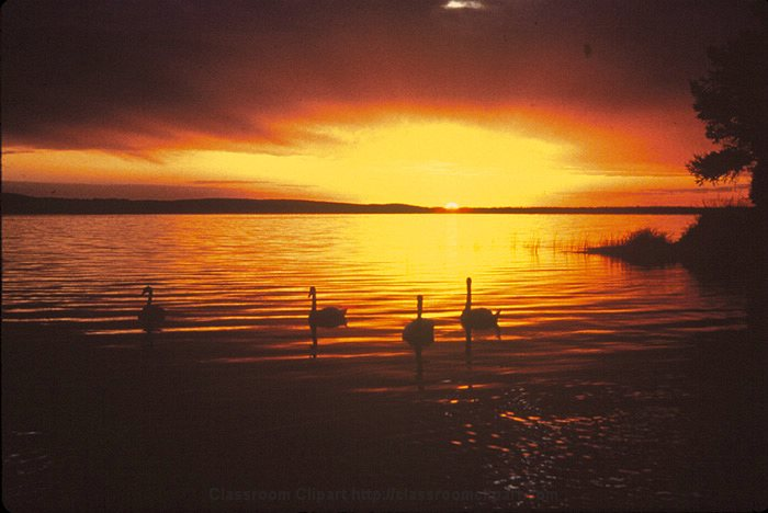 Sunset_and_Swans.jpg