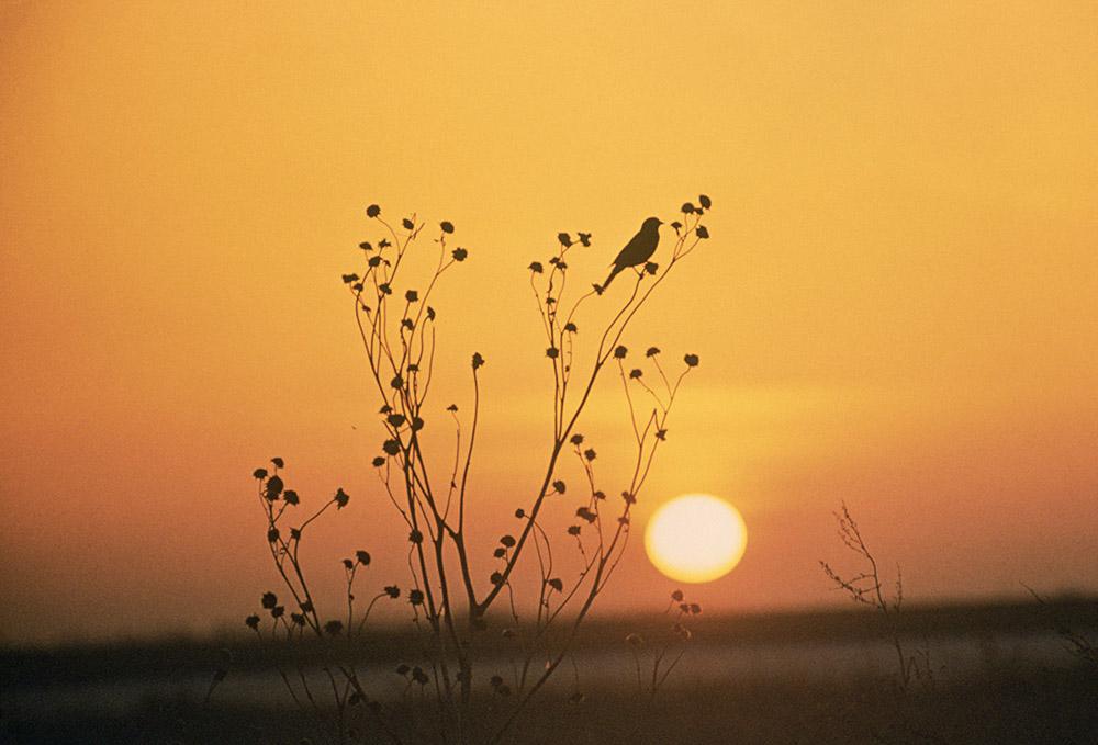 photo-sunset-at-tewaukoa-national-wildlife-refuge-north-dakota.jpg