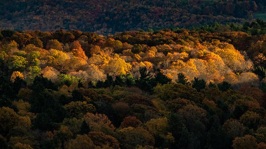 sunrise-reveals-fall-colors-in-massachusetts.jpg
