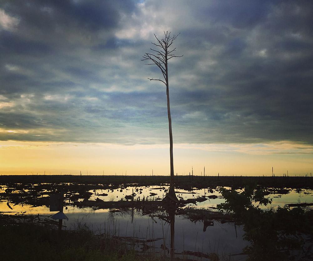 sunset-great-dismal-swamp-2018.jpg