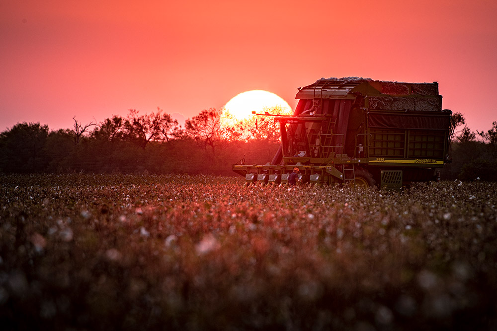 view-of-cotton-field-with-harvester-at-sunset.jpg