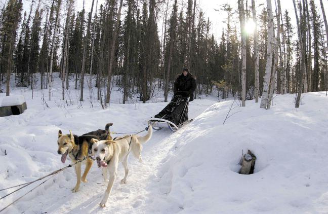 dog_sled.jpg