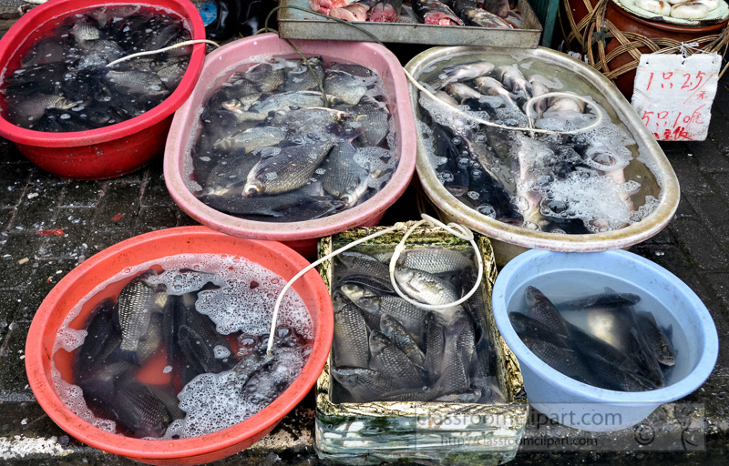 Various-Fresh-seafood-in-buckets-at-market-in-china-photo-image-24.jpg
