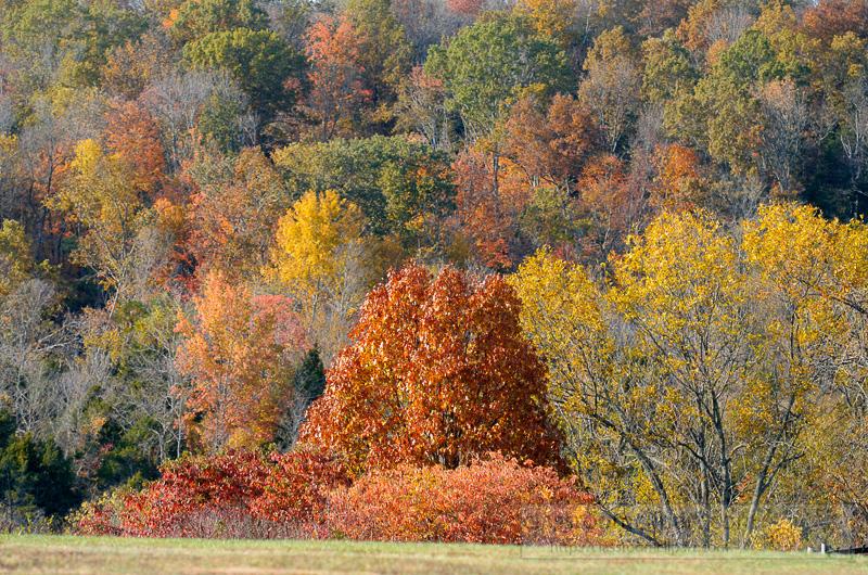 fall-colors-on-hillside.jpg