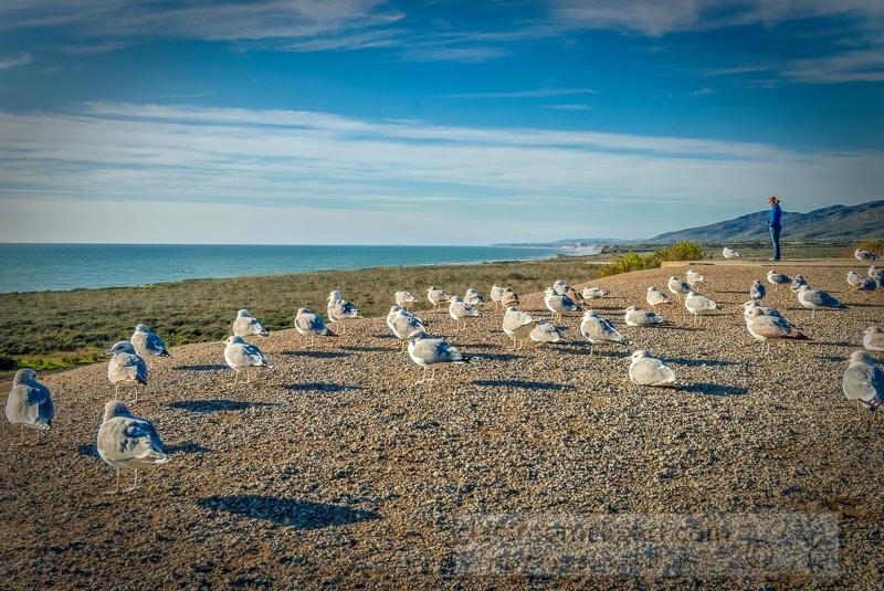 photo-group-of-seagulls-along-southern-california-coast-image-.jpg