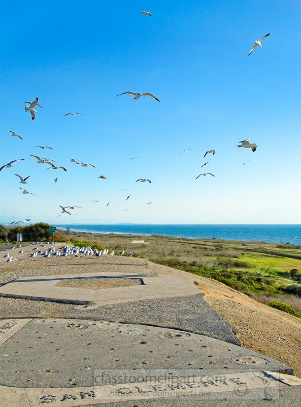 photo-group-of-seagulls-flying-along-san-clemente-sea-coast-image-.jpg