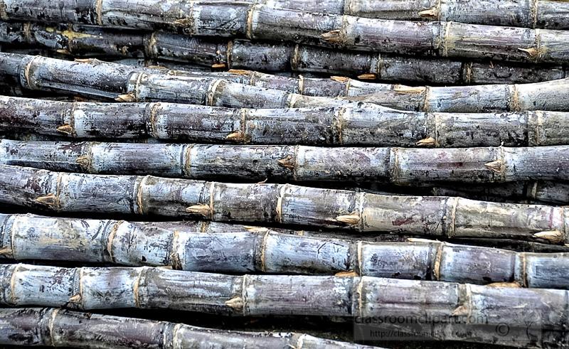 stacks-of-sugar-cane-at-outdoor-market-photo-image-60A.jpg