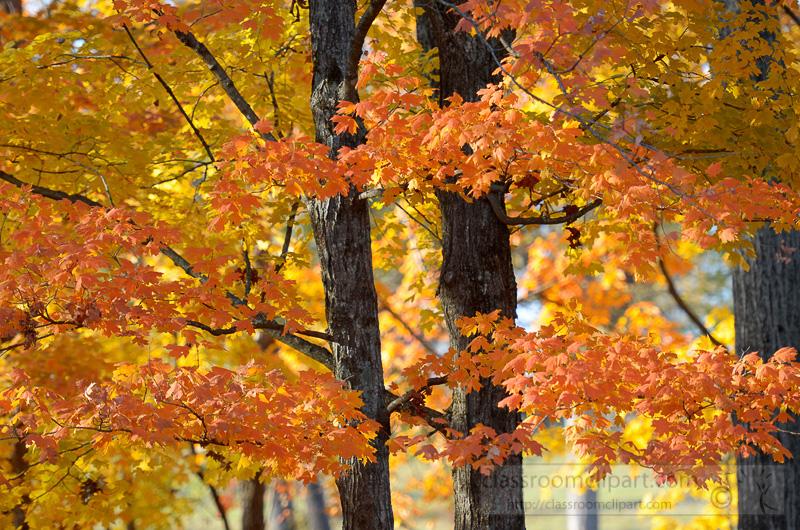 trees-fall-colors-orange.jpg